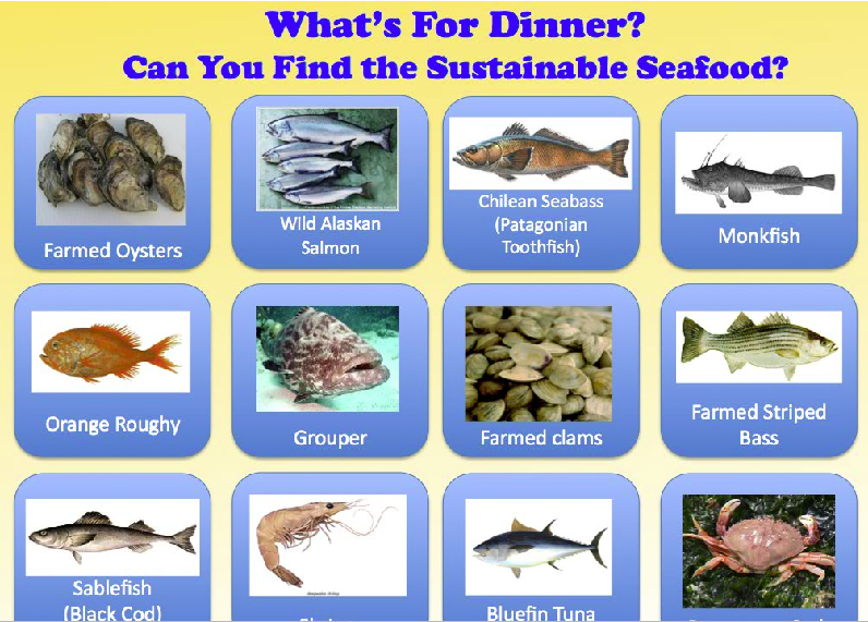 Sustainable Seafood Game