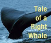 Tale of a Right Whale