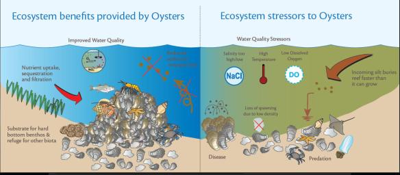 NOAA illustration