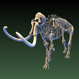 Image of Woolly Mammoth