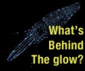 Bioluminescence overview