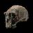 Human Origins at SI