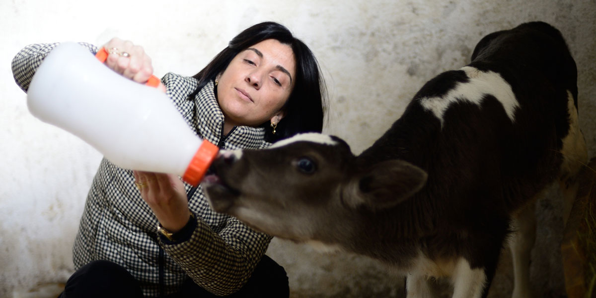 Photo of Nino Zambakhidze, MCC beneficiary from the MCC Georgia Compact, feeding a calf from a bottle on her dairy farm.