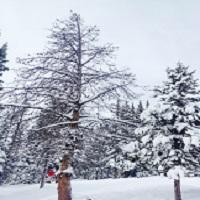 Snowmelt Perturbations