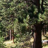 Boulder Creek Critical Zone Observatory