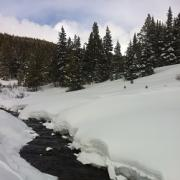 snowfall in subalpine forest