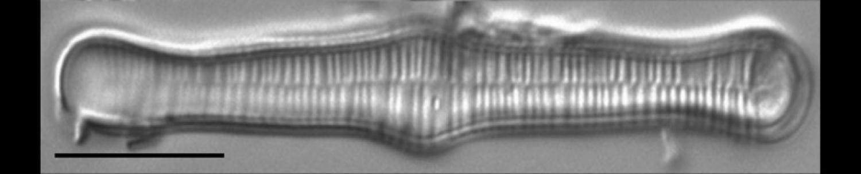 Diatom Lab, INSTAAR