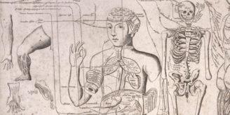 Anatomical engraving 1679.