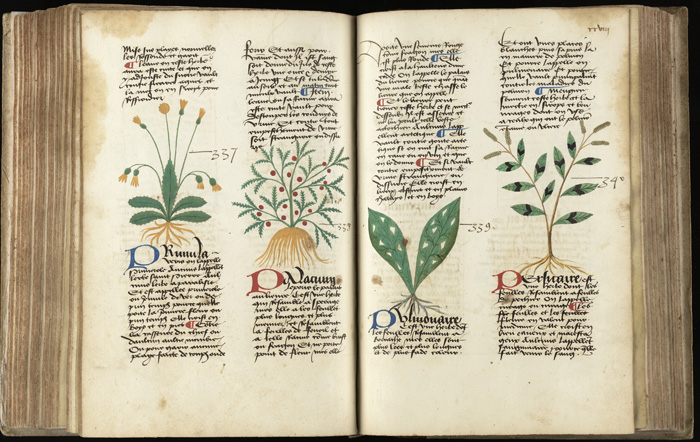 Medieval herbal showing plants.