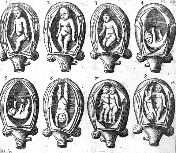 L0016294 8 representations of the foetus in the womb. Credit: Wellcome Library, London. Wellcome Images images@wellcome.ac.uk http://wellcomeimages.org 8 representations of the foetus in the womb. Engraving The midwives book Jane Sharp Published: 1671 Copyrighted work available under Creative Commons Attribution only licence CC BY 4.0 http://creativecommons.org/licenses/by/4.0/