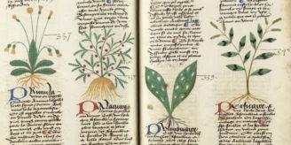 Medieval herbal showing plants.