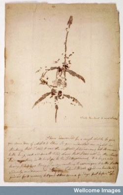 L0022370 Letter from Mary Anning concerning the discovery of the pleisiosaurus (MS.8592)