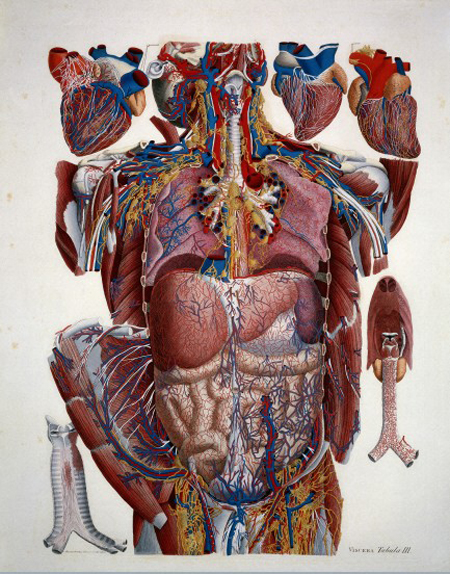 Illustration of human viscera. By Paulo Mascagni. Wellcome Images L0019305