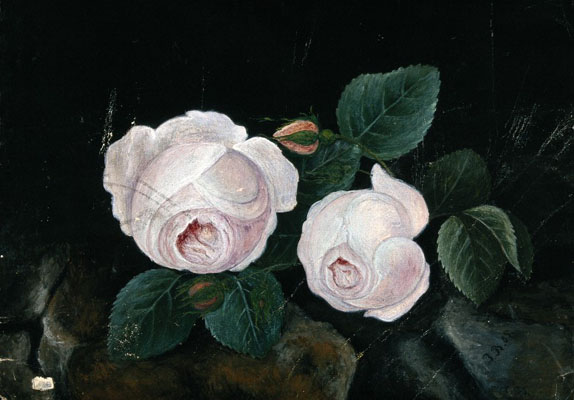 Two white roses, in a still-life. Watercolour by J.D.(?), Wellcome Images No.V0043477.