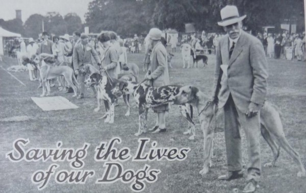 Image of dogs from The Field magazine
