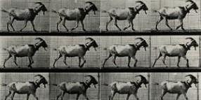 goat-feat