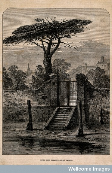 V0012955 The Physick Garden, Chelsea: viewed from the river, showing
