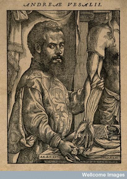 V0006025 Portrait of Andreas Vesalius (1514 - 1564), Flemish anatomist