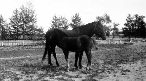 Ruby with her colt, Tessie