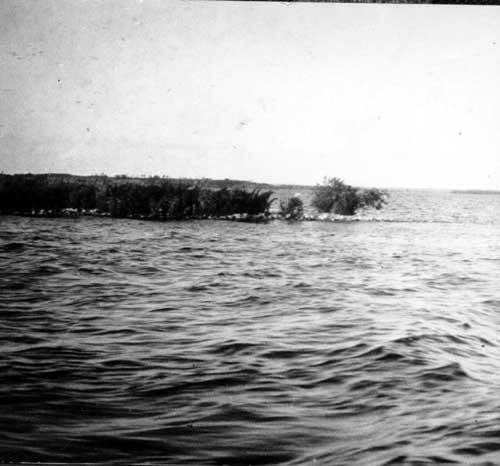 Pélicans au lac la Biche