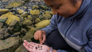 Someone looking down at a handful of snails, on a beach.