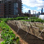 Photo of An urban farm in Chicago.