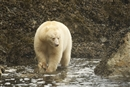 Top Seven Wondrous Facts about the Great Bear Rainforest