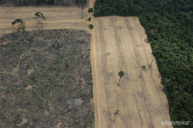 View of the Amazon from above. This 1645 hectare area has been logged to plant soy.