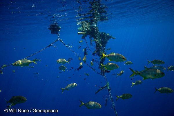 Greenpeace retrieve another FAD from the Indian Ocean. The FAD was inspected by an ROV before divers entered the water to inspect the FAD underneath the surface. THe aggregation device was taken onboard the Esperanza and fully dismantled by the ship's crew.The Greenpeace ship Esperanza continues on an expedition in the Indian Ocean to peacefully tackle unsustainable fishing. With some tuna stocks in the Indian Ocean, such as Yellowfin, on the brink of collapse due to overfishing, the expedition is exposing destructive fishing methods which contribute to overfishing and harm a range of marine life including sharks and juvenile tuna.