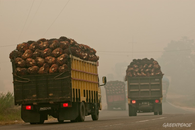 Trucks loaded palm oil fruit drive trough haze at Rokan Hilir Regency on June 25, 2013, in Riau Province, Indonesia. The forest fires continue to cause record-breaking air pollution in Singapore and Malaysia.