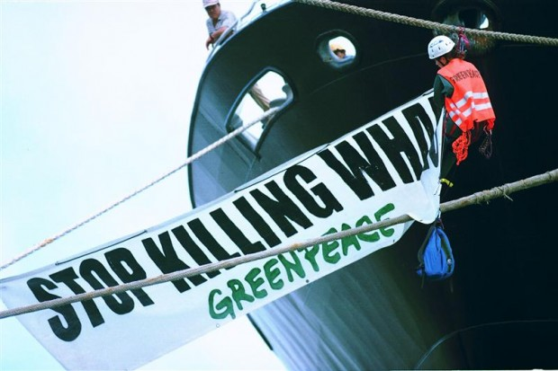 "Greenpeace activist on ropes of Japanese whaling ship ""Nisshin Maru"". Greenpeace occupies the whaler in protest of the Japanese whaling policy in 1998.© Greenpeace / Martial Dosdane"