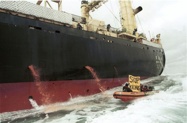 Greenpeace protest against factory ship Nisshin Maru in the  Southern Ocean in 1992.© Greenpeace / Robin Culley
