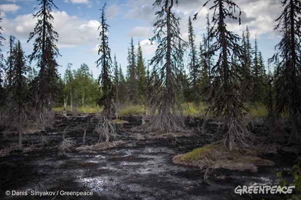 Dead forest in Komi Republic - 20 Aug, 2014