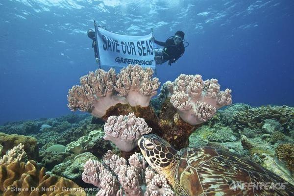 Reef Investigation in Apo Island. 07/11/2013 © Steve De Neef / Greenpeace