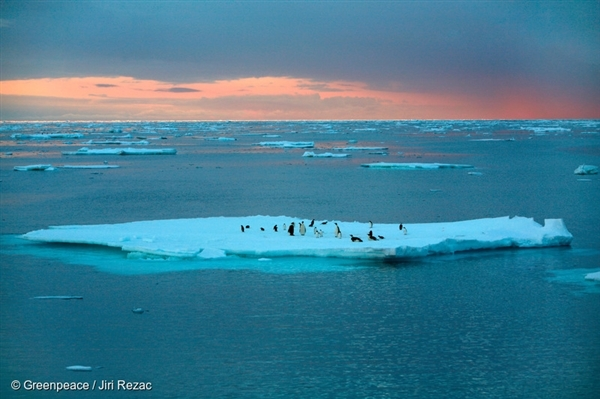 Emperor and Adeli Penguins are on a piece of open ice in the Southern Ocean.