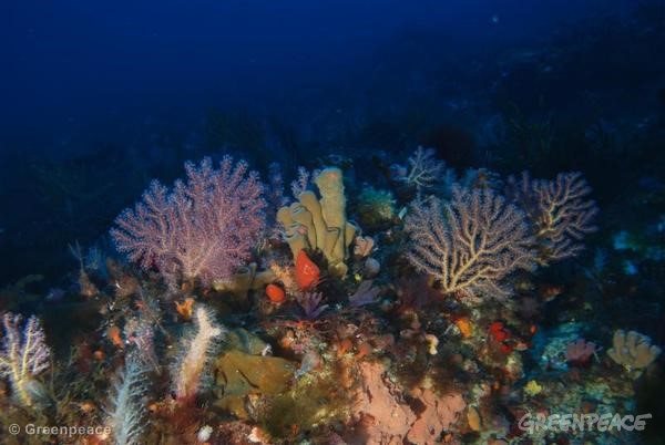 Underwater Image of the Sicilian Channel. 07/14/2012 © Greenpeace