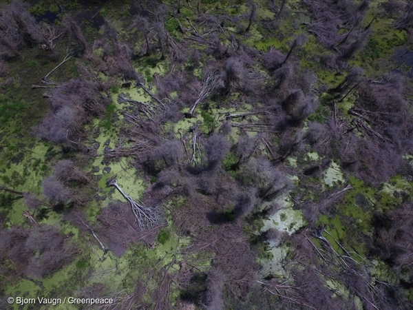 Drone footage near the PT Bumi Sawit Sejahtera (IOI) oil palm concession in Ketapang, West Kalimantan, reveals the impact of repeated forest fires.