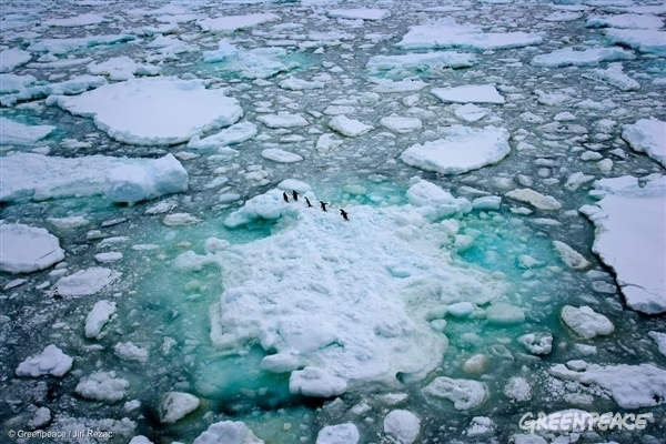 Adeli Penguins in the Antarctic Ocean, 2008
