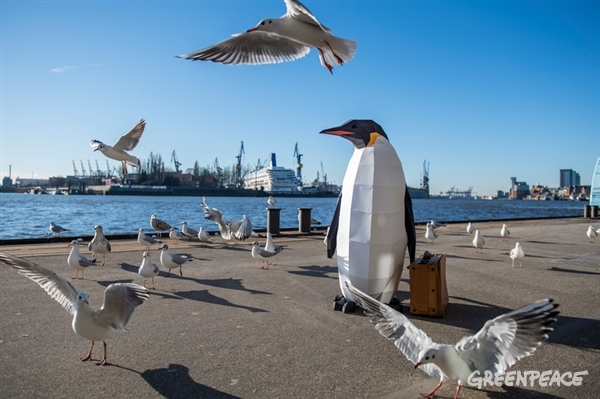 Spotted in Hamburg causing a flap amongst the local seagulls.