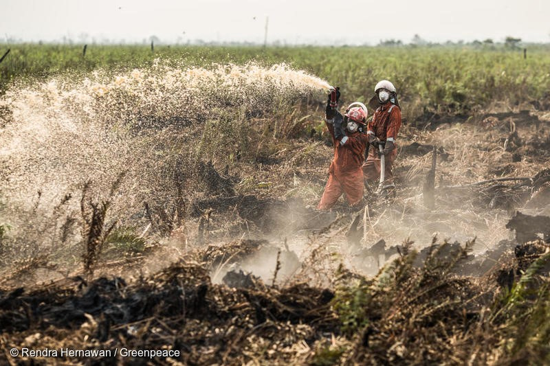 Greenpeace Forest Fire Prevention (FFP) team extinguish fire at a peatland area in  Punggur Kecil village, Sungai Kakap sub-district,  Kubu Raya district, Pontianak, West Kalimantan. The FFP team is deployed in the area to do fire suppression and investigation for fire that is happened in peatland area.