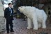 A Greenpeace polar bear outside the National Party's AGM at the M