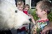 A polar bear meets members of the public in Mission Bay, Auckland