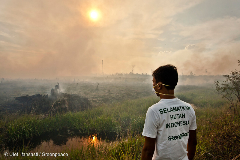 A greenpeace activist bear witness massive peatland destruction caused by the fires in Sontang Village on June 23, 2013, in Rokan Hulu Regency, Riau Province, Indonesia. The fires that burn Indonesia's Sumatra island are a reminder that the destruction of Indonesia's forests is an international problem, and urging immediately action from government as the haze shrouded neighboring Singapore and Malaysia.N 01.16900° - E  100.84857°