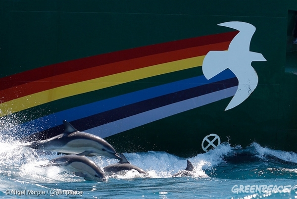 Dolphins swim alongside the Rainbow Warrior in the Cook Strait, New Zealand; very close to where Texan oil company Anadarko intends to begin prospecting later this year.