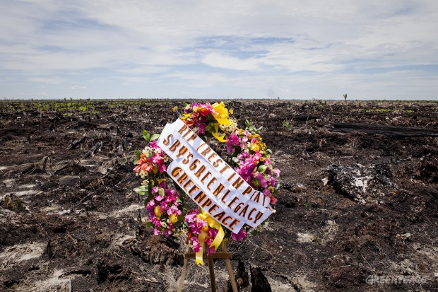 Greenpeace Mourners Mark Death of Indonesia's Peatlands