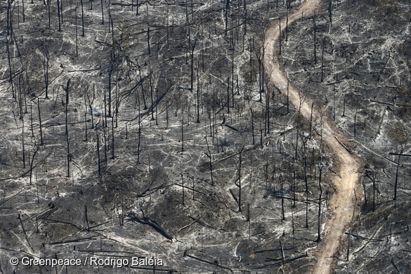 Burning Rainforest in the Amazon: Deforestation caused by fires. 25 Aug, 2008  © Greenpeace / Rodrigo Baléia
