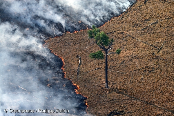 Burning pasture in deforested area in the Amazon. 25 Aug, 2008 © Greenpeace / Rodrigo Baléia