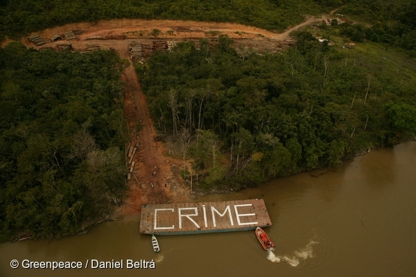 Greenpeace discovers an illegal logging operation with at least 200km of roads serving the operation. Greenpeace activists paint the loggers barge with the message 'CRIME' then uses it to blockade access to the sort yard. 21 Nov, 2003 © Greenpeace / Daniel Beltrá