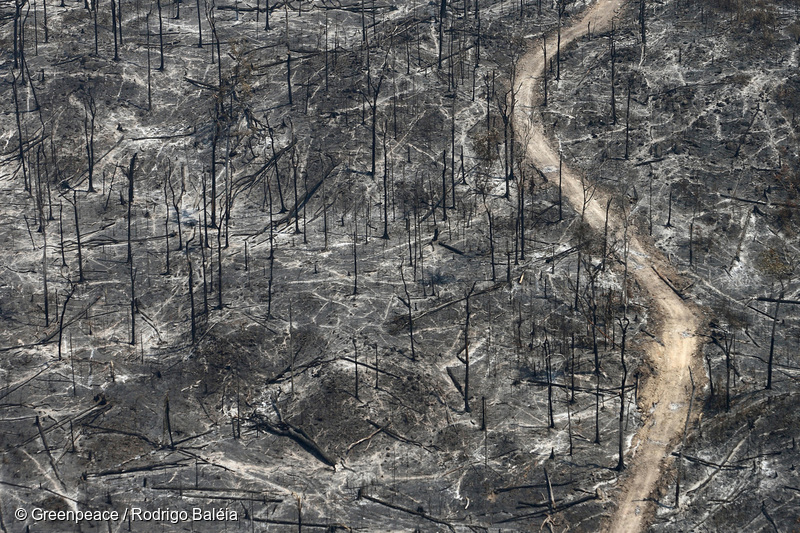 Burnt area in the influence zone of  BR 163. The deforestation, especially in the Amazon, is responsible for 75% of the Brazilian greenhouse gases emissions, putting the country as the 4th world´s top polluter of the climate.
