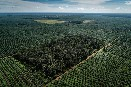 World's largest palm oil trader linked to rainforest destruction twice the size of Paris
